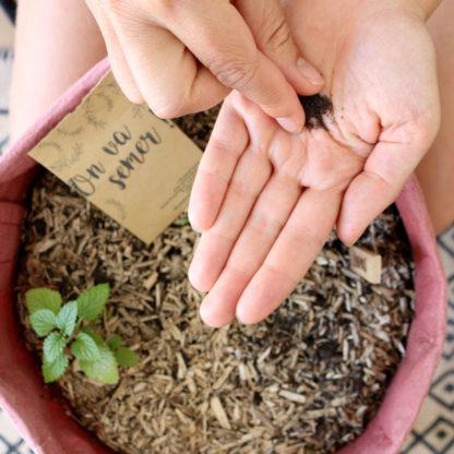 Semer des graines bio pour faire pousser des fleurs pour son mariage